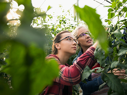 Two female scientists in a greenhouse examining plants.