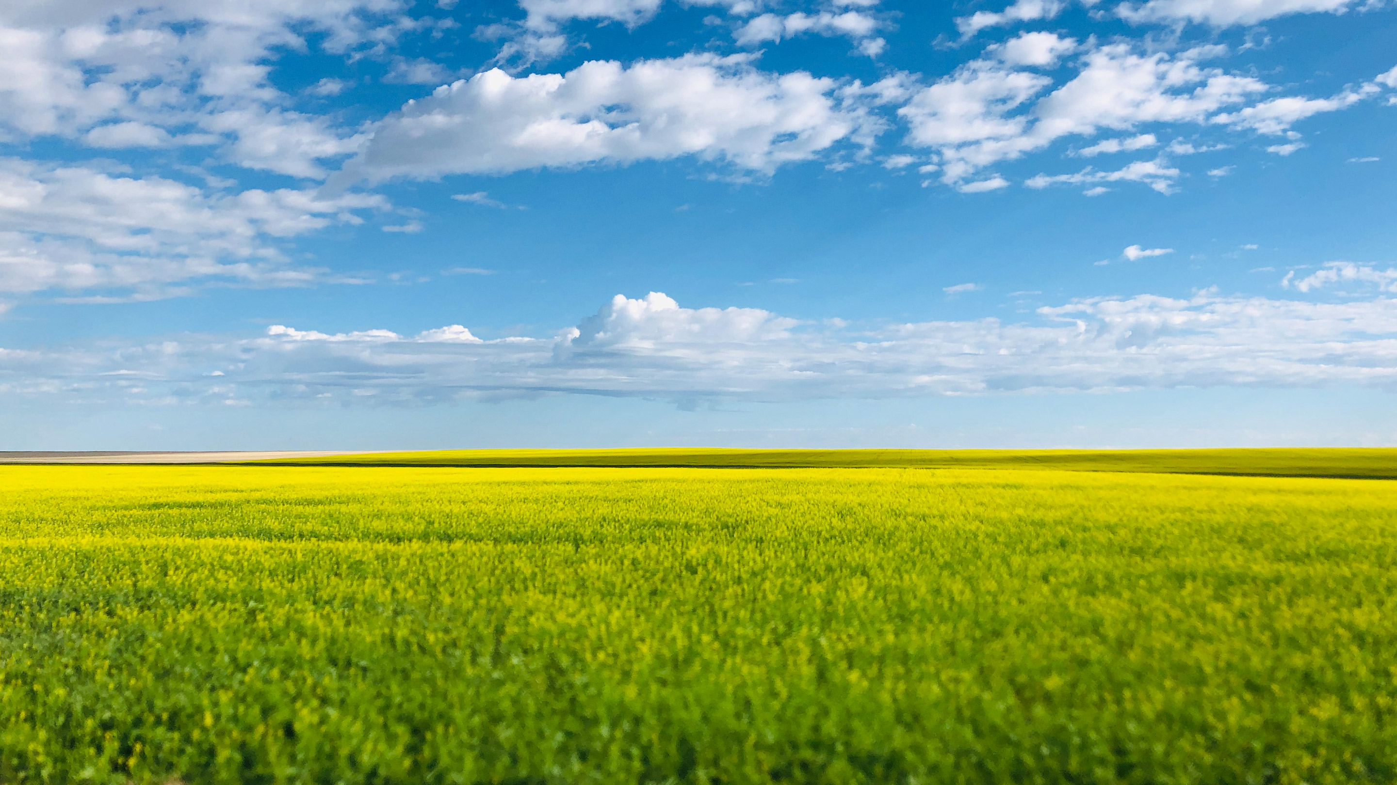camelina, a patented fallow land crop used in production of renewable diesel with GCEHoldings